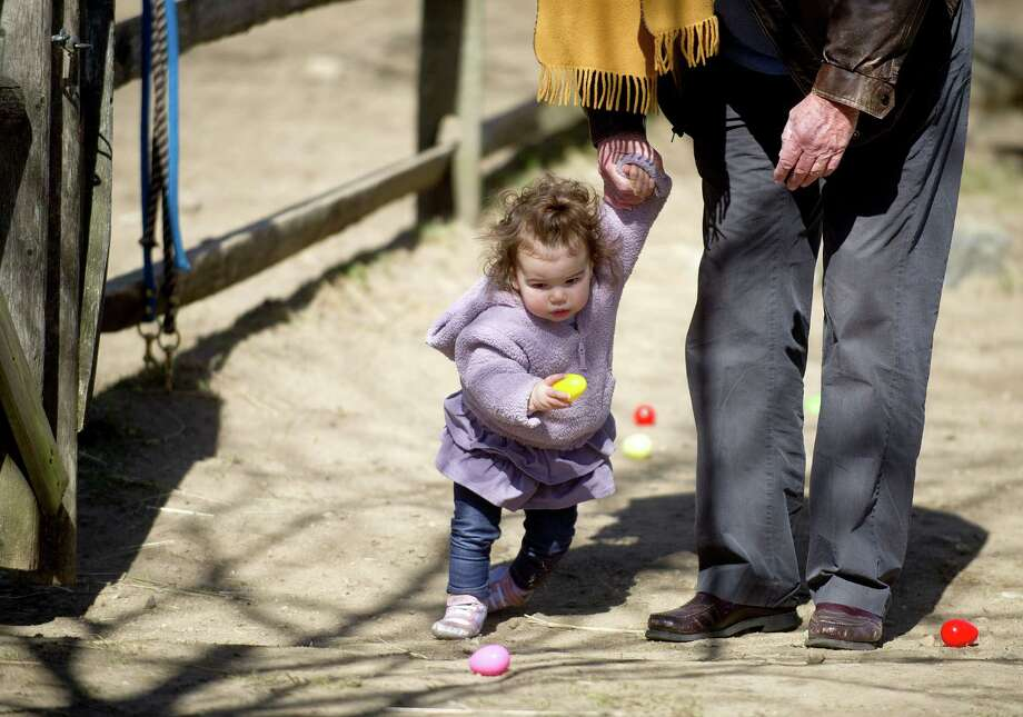 Lila Levine, 1, holds hands with her grandfather, Tom Pope, as they collect eggs during the 9th Annual Heckscher Farm Egg Hunt on Saturday, March 30, 2013. Photo: Lindsay Perry / Stamford Advocate