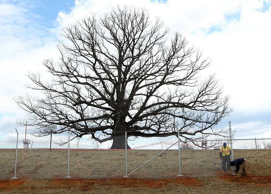 This photo taken March 28, 2013 shows the Charlottesville/Albemarle Airport Authority erecting a fence around the airport property that houses one of Virginia's largest white oak trees.  (AP Photo/The Daily Progress, Andrew Shurtleff) Photo: Andrew Shurtleff, Associated Press