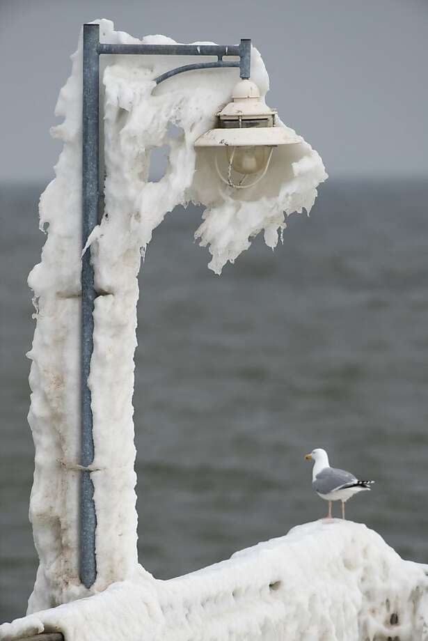 A seagull stands on a pier covered with icicles on the island of Ruegen in Goehren, Germany, on March 31, 2013.   AFP PHOTO / STEFAN SAUER /GERMANY OUTSTEFAN SAUER/AFP/Getty Images Photo: Stefan Sauer, AFP/Getty Images