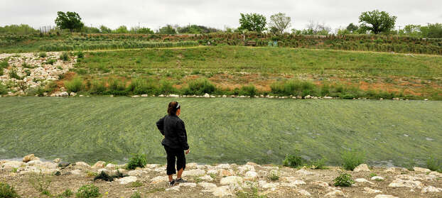 Jeannie DeLeon looks over an algae-covered area of the San Antonio River Sunday morning along the recently completed Mission Reach at Padre Park, March 31, 2013. Photo: Robin Jerstad, For The San Antonio Express-News