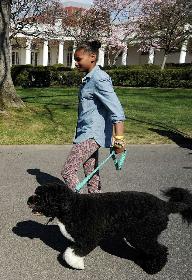 Sasha Obama walks with family dog Bo to the White House Easter Egg Roll on the South Lawn of the White House April 1, 2013. (Olivier Douliery/Abaca Press/MCT) Photo: Olivier Douliery, McClatchy-Tribune News Service / Abaca Press