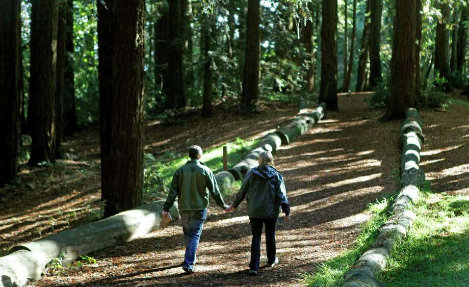 You can run, bike, hike and picnic in redwood parks every day. Photo: Lance Iversen, The Chronicle / SFC