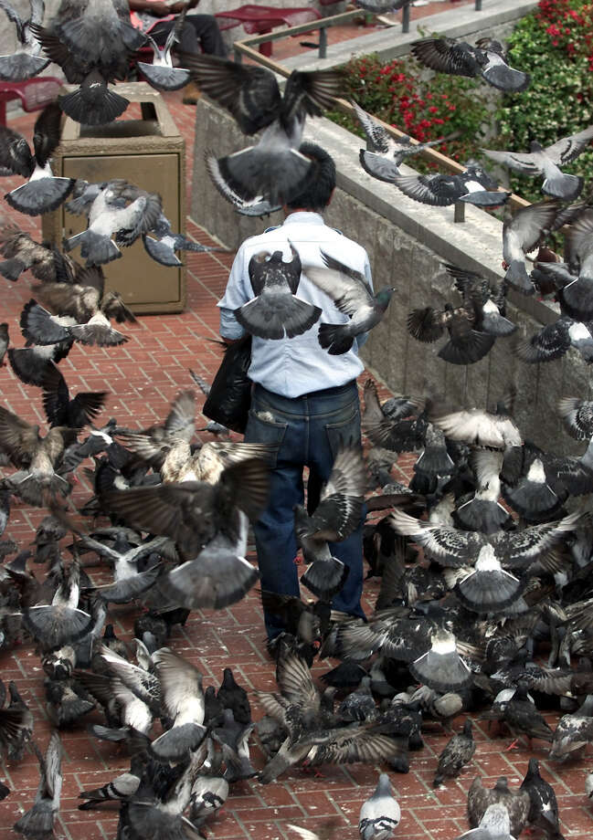 ...than the pigeons on Market Street. Photo: LANCE IVERSEN, SFC / SAN FRANCISCO CHRONICLE