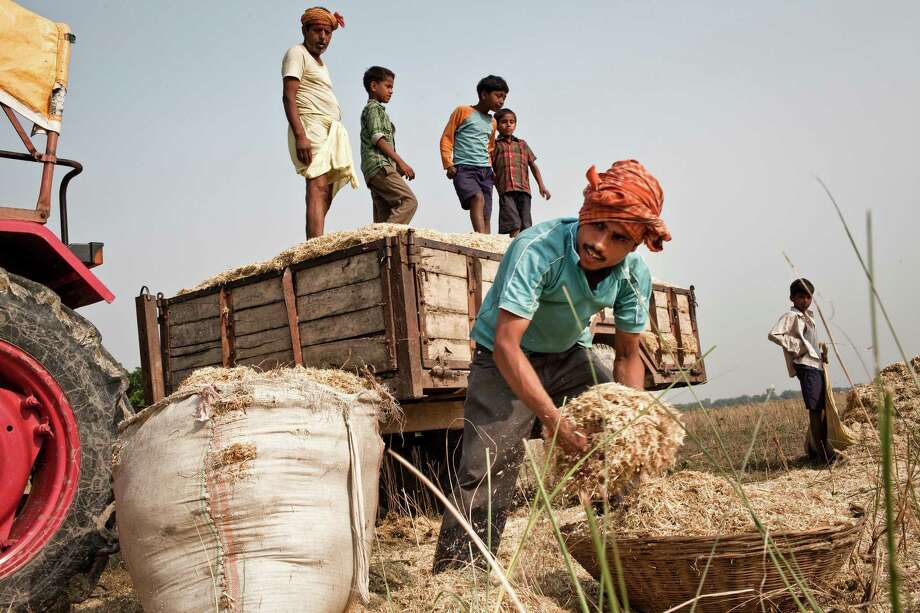 A family gathers agricultural waste in the village of Samhauta in a rice-growing region of northeastern India. Global warming, water shortages and continuing population growth all are contributing to a global food shortage. Photo: SANJIT DAS, File Photo / NYTNS