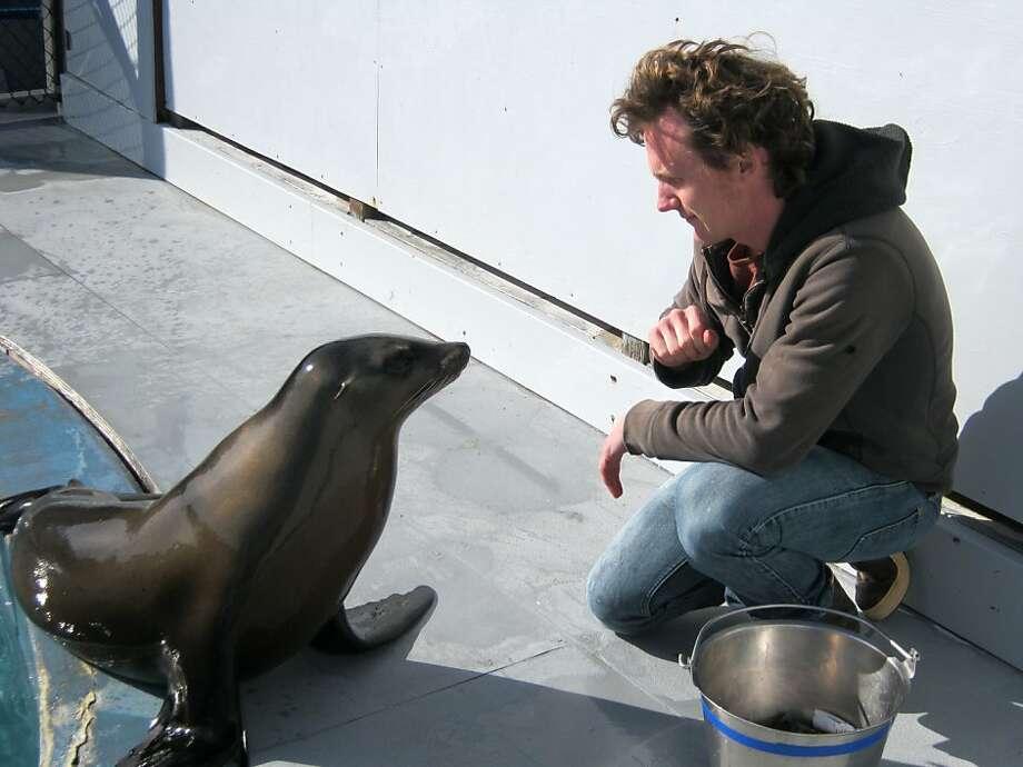 UC Santa Cruz graduate student Peter Cook trained sea lion Ronan to bob her head in time with music. Photo: C. Reichmuth, U.C. Santa Cruz
