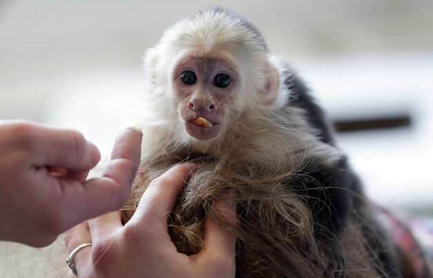 Bieber's monkey, Mally, was almost as famous as Beiber himself for a hot