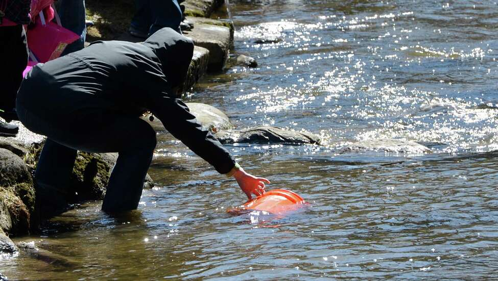 A parent reaches for a lost bucket in Geyser Creek April 3, 2013, in Saratoga Spa State Park during the annual fish stocking event in Saratoga Springs, N.Y. (Skip Dickstein/Times Union)
