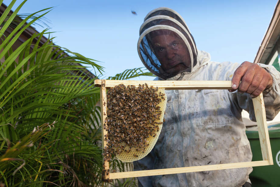 We keep bees as pets. Listen urban farmers, honey is wonderful, and backyard chickens are OK. But keeping a bunch of stinging insects in a dense city verges into \'\'Portlandia\'\' territory. Photo: Juan Silva, Getty Images / (c) Juan Silva