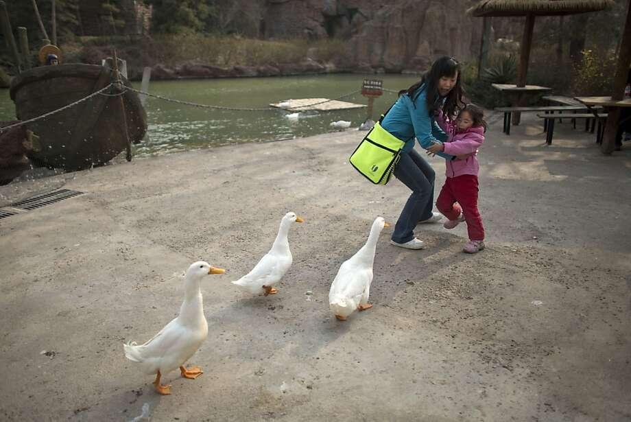 A woman and her daughter are frightened while ducks approach closely for food at an amusement park in Beijing, China, Wednesday, April 3, 2013. Scientists taking a first look at the genetics of the bird flu strain that recently killed two men in China said Wednesday the virus could be harder to track than its better-known cousin H5N1 because it might be able to spread silently among poultry without notice. The bird virus also seems to have adapted to be able to be able to sicken mammals like pigs. (AP Photo/Alexander F. Yuan) Photo: Alexander F. Yuan, Associated Press