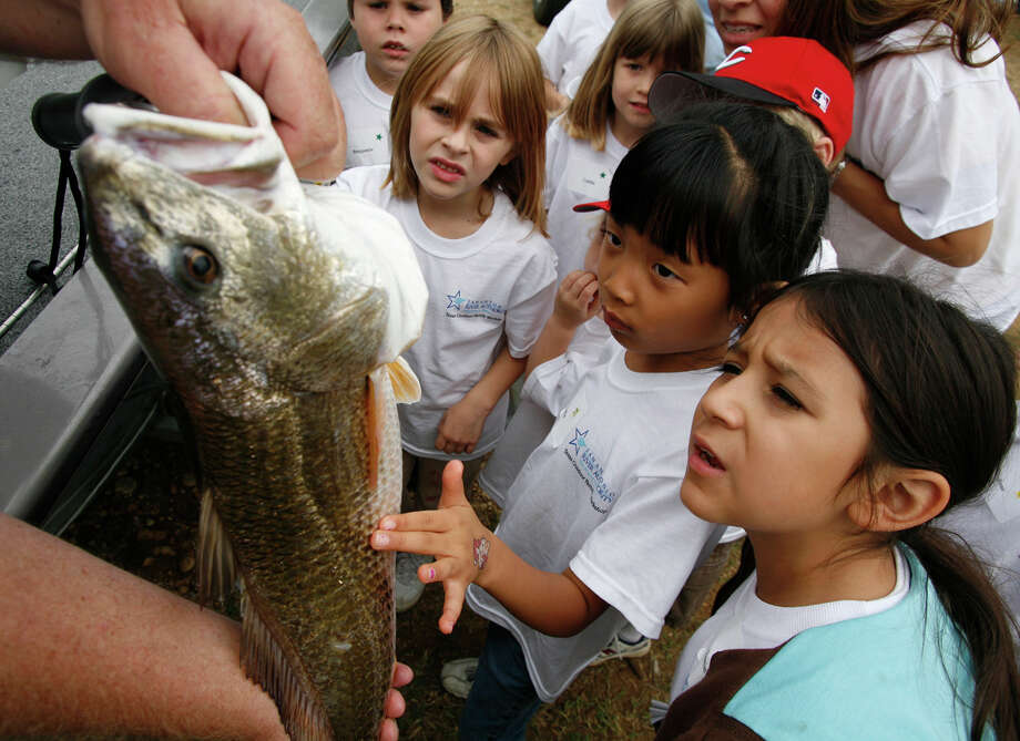 State Saltwater FishRed Drum,House Concurrent Resolution No. 133, 82ndLegislature, Regular Session (2011) Photo: J. MICHAEL SHORT, File Photo / THE SAN ANTONIO EXPRESS-NEWS
