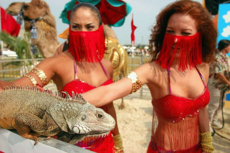 Crazy crap Americans believe -- Known for its niche polling, the Public Policy Polling outfit explored the crazy crap American's believe (okay, sorry to believers) … and here's what they found:Is this the Lizard King and his entourage of ministers? Photo: William Thomas Cain, Getty / 2004 Getty Images