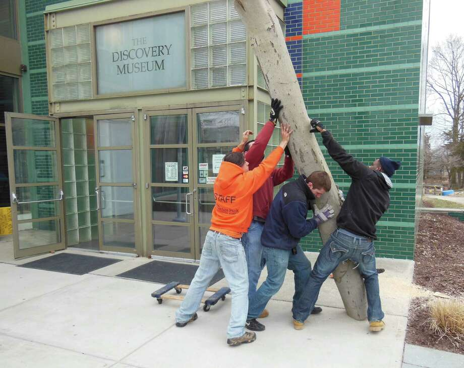 "The Discovery Museum in Bridgeport is opening two new exhibits, ""Adventure Science"" and ""Rainforest Explorers."" Above, museum staff ""re-purpose"" a fallen tree for the science exhibit. Photo: Contributed Photo"