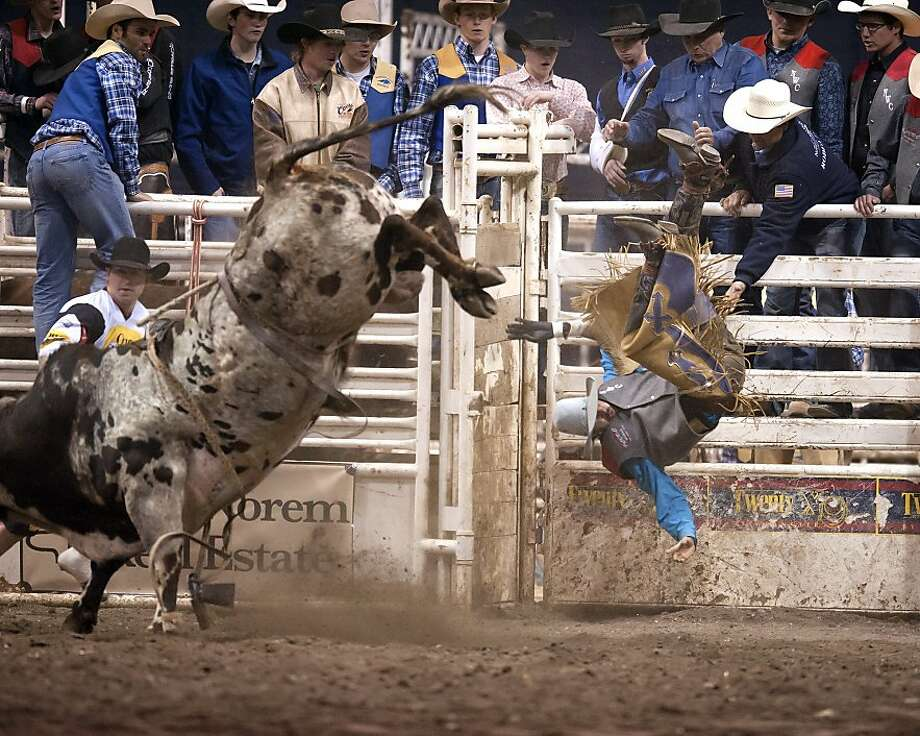 In this photo provided by Montana State, Northwestern College's Cole Stevenson is launched into the chutes during the bull riding event at the Montana State University spring rodeo competition, Thursday, April 4, 2013, in Bozeman, Mont. (AP Photo/Montana State, Kelly Gorham) Photo: Kelly Gorham, Associated Press
