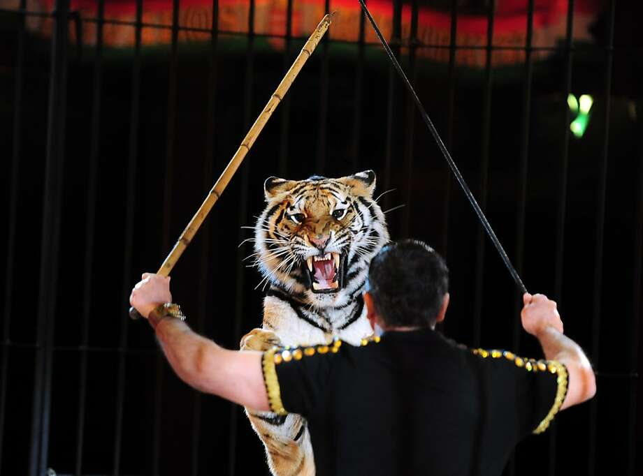 Testy under the big top: Tiger trainer Darix Togni of the Italian Circus Maximus confronts a fractious trainee during a performance for the Capital Grand Circus of Budapest. Photo: Attila Kisbenedek, AFP/Getty Images