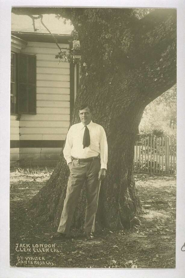 "A photo of the London Cottage depicting Jack London standing beside a tree just west of the cottage. This tree no longer exists and was removed or fell decades ago. It was almost certainly a ""daughter\"" of the big grandmother tree we must now remove. The grandmother tree stands about 40 feet behind the photographer in this old photo. Photo: Courtesy E. Breck Parkman"