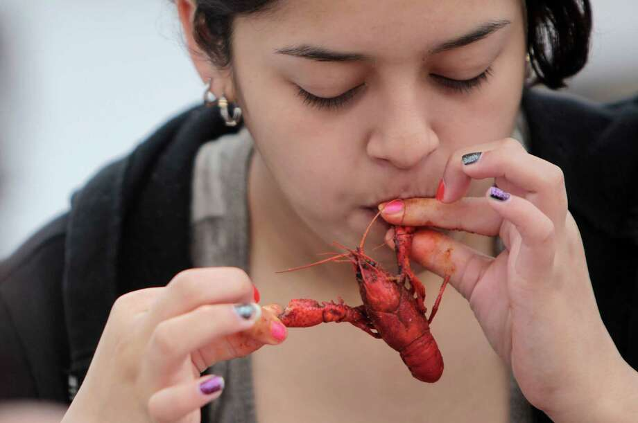Julia Villanueva, 13, of Pasadena, pulls apart a crawfish during the Pearland Crawfish Festival on Saturday, April 6, 2013, in Pearland. The Pearland Crawfish Festival served up spicy crawfish, live Zydeco music, and a variety of vendors. The festival opens Sunday, March 7th, from 11 a.m.- 6 p.m. off south 288 between FM 2234 and FM 518. Photo: Mayra Beltran, Houston Chronicle / © 2013 Houston Chronicle