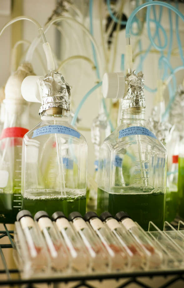 Vials of algae are stored in the University of Texas biology building. Photo: Ashley Landis, Houston Chronicle