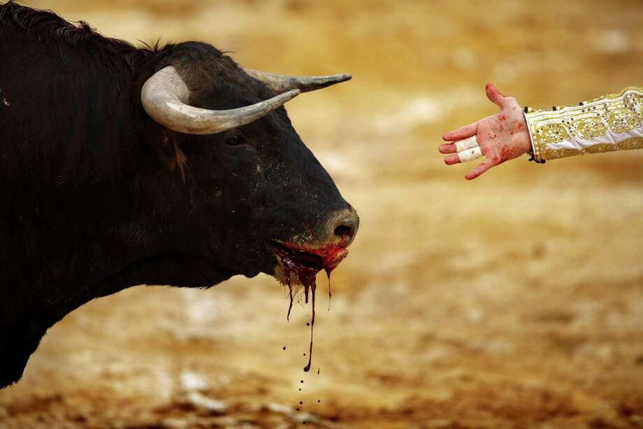 A Garcigrande ranch fighting bull bleeds during a bullfight at La Muralla bullring in Brihuega, Spain, Saturday, April 6, 2013. Bullfighting is an ancient tradition in Spain and the season runs from March to October. Photo: AP