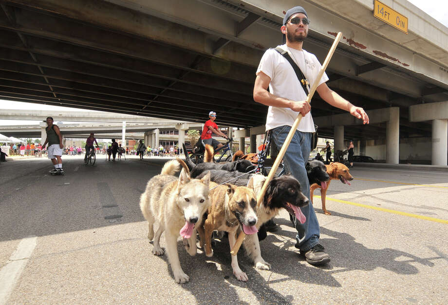 Andres Valdez walks with his 12 dogs along Broadway during Sunday's Siclovia event hosted by the YMCA and the city of San Antonio. Photo: Robin Jerstad, Express-News