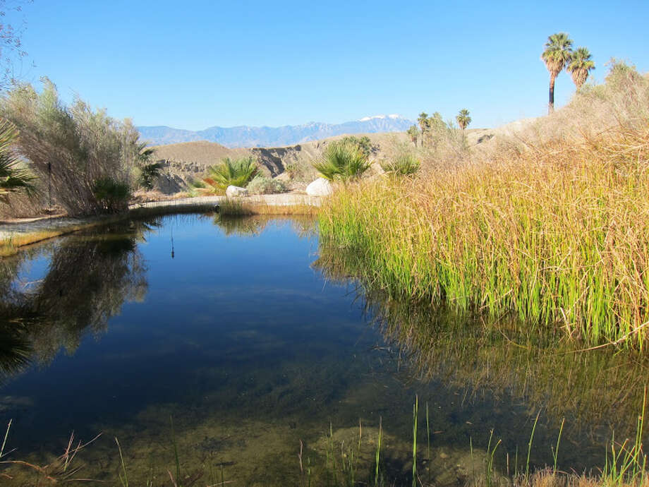 In the nearby Coachella Valley Preserve, you can hike around desert oases where Native Americans once dwelled. Photo: For The Express-News