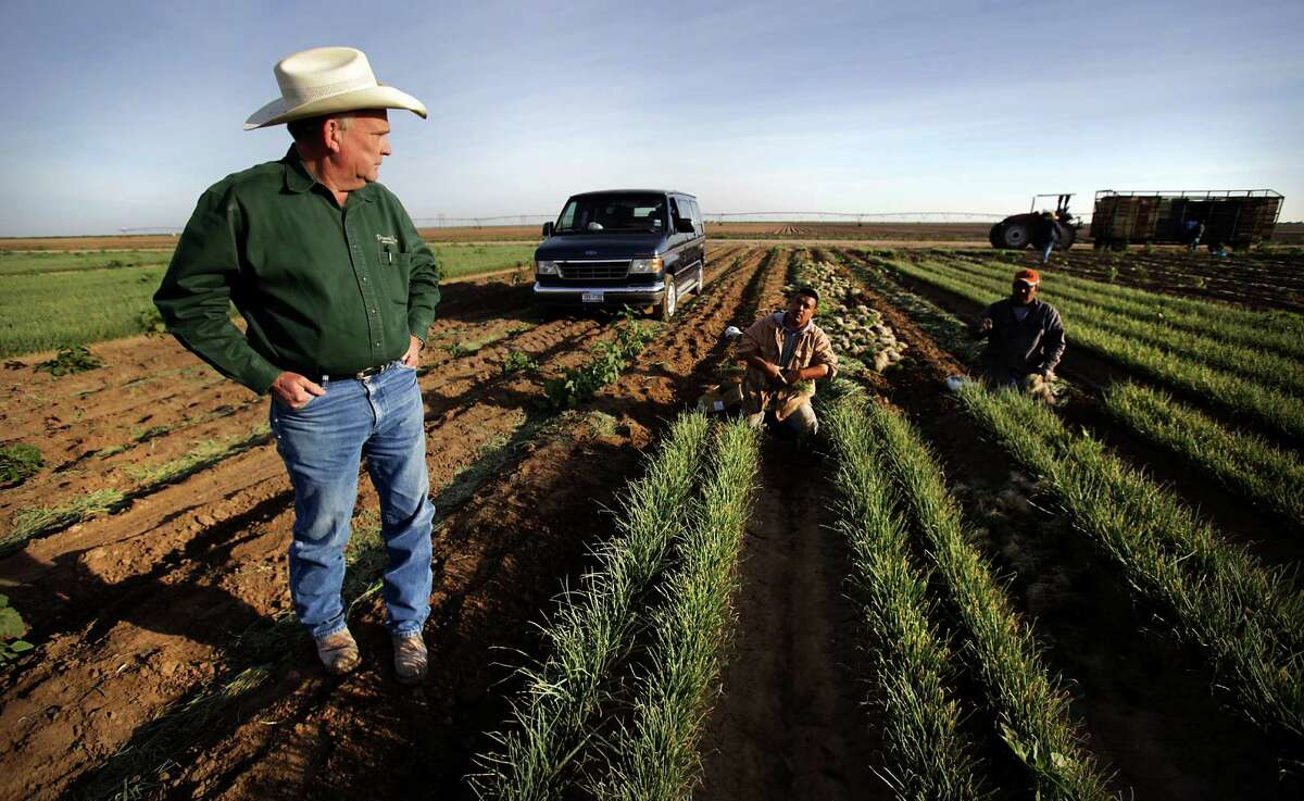 Bruce Frasier, left, President of Dixondale Farms talks to Sergio Vera Jr, center, and his father Sergio Vera Sr., immigrant workers harvesting onion plants at Dixondale Farms just outside Carrizo Springs on Friday, April 5, 2013. Top industry leaders from agriculture to construction met with the White House over the past month asking for more flexibility in hiring foreign labor, including extending work authorization to the parents of children receiving a reprieve from deportation thanks to Obama's signature immigration initiative known as deferred action.