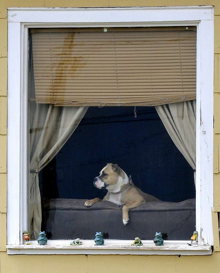 A dog watches the world pass by from it's home on north Washington Ave. Monday, April 8, 2013 In Enid, Okla. (AP/Enid News & Eagle, Billy Hefton) Photo: Billy Hefton, Associated Press