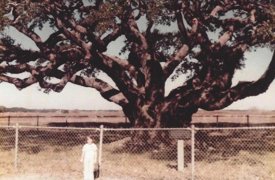Then:Big Tree Goose Island December 31, 1975 Photo: Courtesy Photos