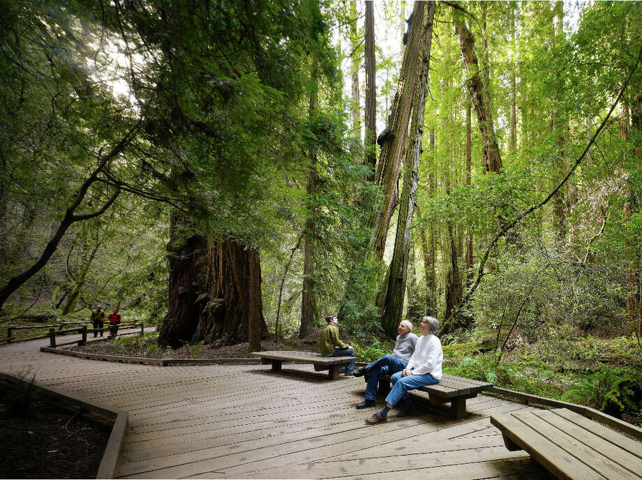 Muir Woods in southwest Marin County. Photo: Michal Venera/Parks Conservancy