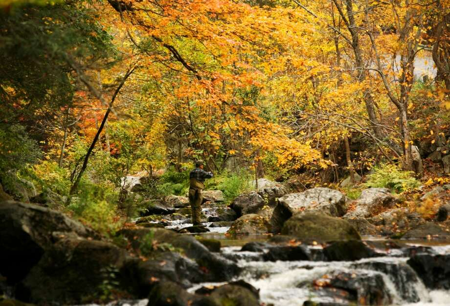 No. 24 (Tie): Weston has 99.1 men per 100 women.  Under a canopy of changing leaves, a fisherman casts for trout in the Aspetuck River in Weston, Conn.