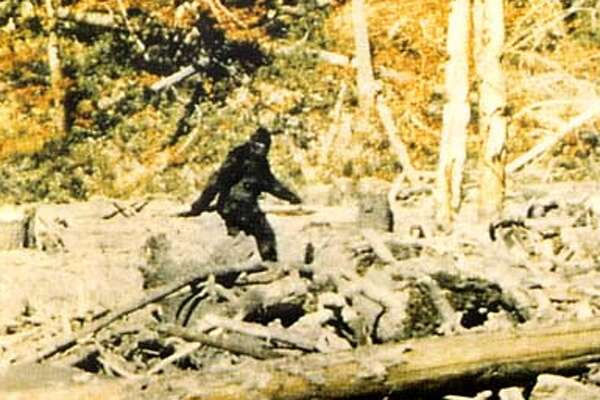 Huge, smelly and hairy, this mythical ape-man has vexed believers who say he exists. The California filmmakers of this famous 1967 image said this was the real thing, but doubters have said the creature looked to be holding a metal thing that looked suspiciously like a beer can.