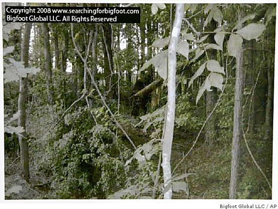 More shadowy Bigfoot sightings, this time in a northern Georgia forest in June of 2008. Bigfoot Global LLC provided this image.