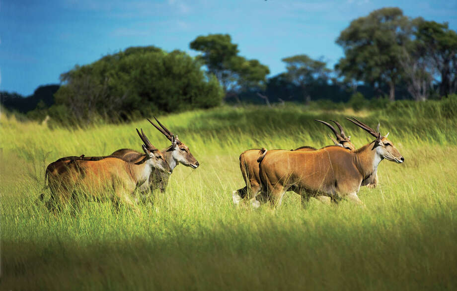 Zimbabwe\'s Hwange National Park, once the hunting grounds of 19th century Ndebele warrior-king Mzilikazi, became a national reserve in 1929.