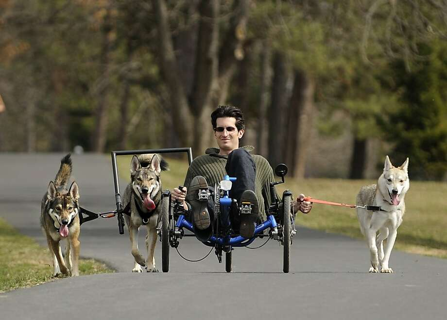 If the law doesn't work outfor Penn State law student Ben Premack, he might have a future at the Iditarod. Premack relaxes on his recumbent bike while his three Tamaskans do the work in State College, Pa. Photo: Nabil K. Mark, Associated Press