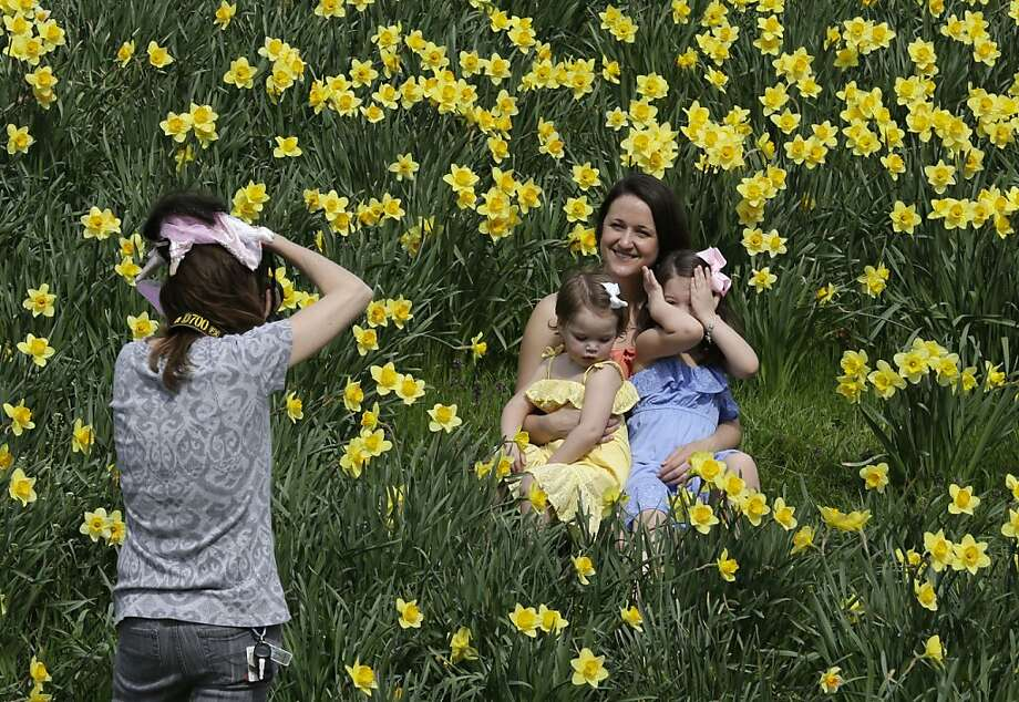 Camera shy: Selina Eviston poses with daughters Harper and Hadley for a daffodil portrait in Cincinnati's Eden Park. Hadley's the bashful one. Photo: Al Behrman, Associated Press
