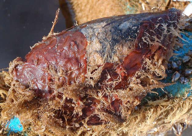 Northwest voyage discovers japan tsunami debris amid for Washington fish and wildlife