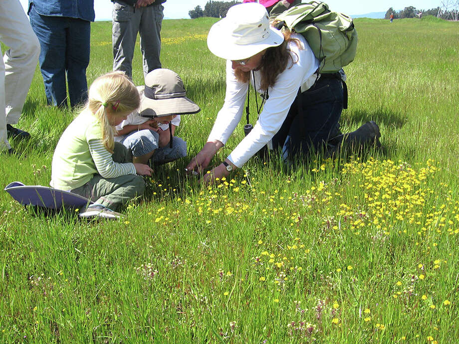 Docent Jane Hicks leads a tour of Jepson Prairie during wildflower season.