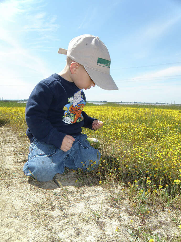 Young Bryson Byrd gets a close-up look at blooms on a Jepson Prairie wildflower walk.