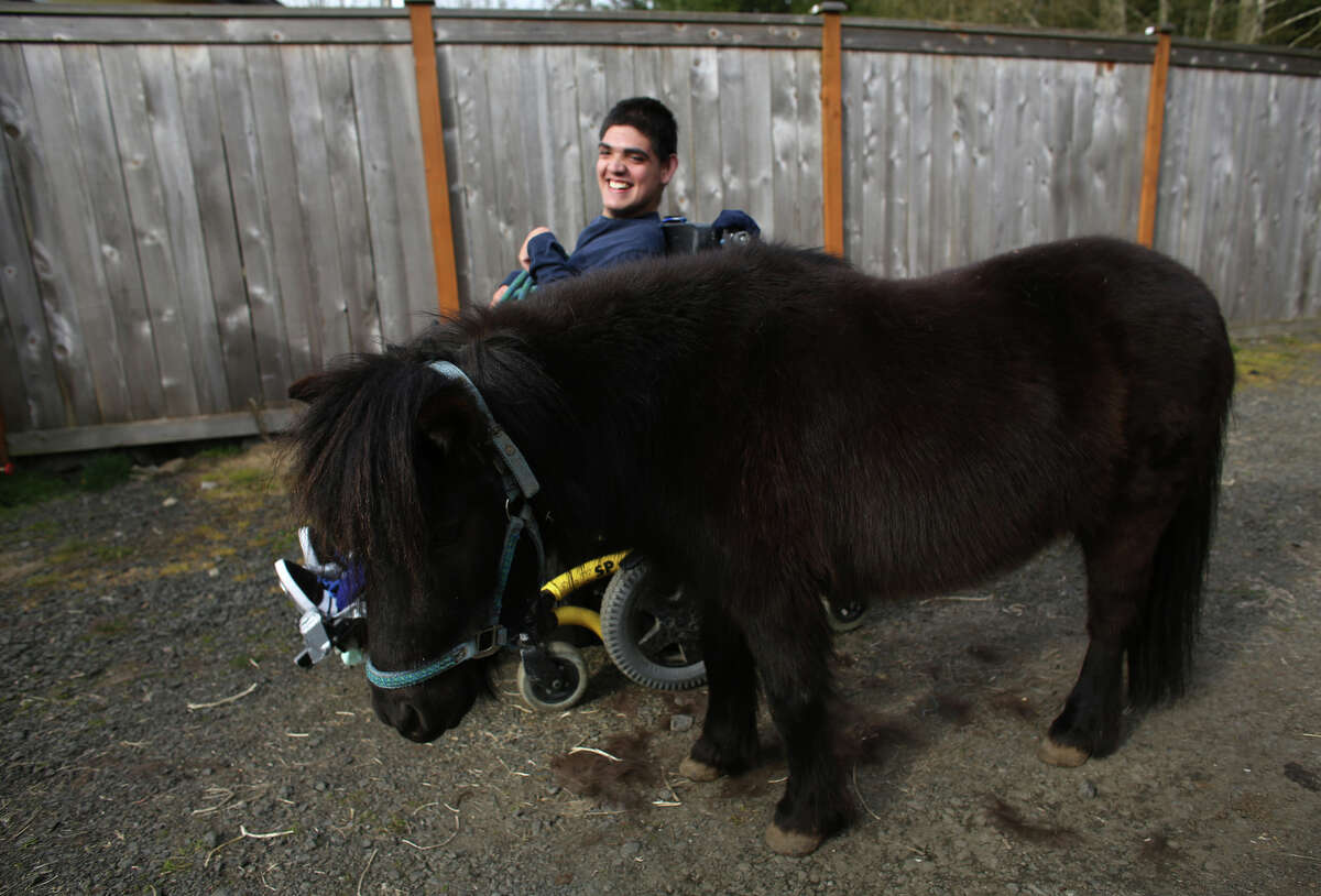 Terry Hoefer holds onto his mini horse Ra at his home near Gig Harbor.
