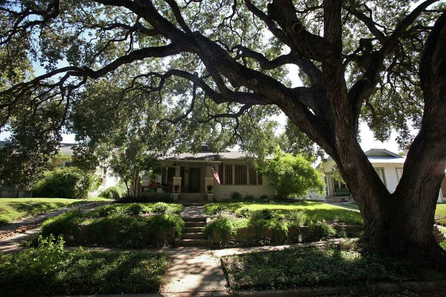As live oak trees shed their leaves, collect them to use as mulch or put them in the compost pile. A moderate amount of leaves can be left to compost on the lawn. Photo: Express-News File Photo