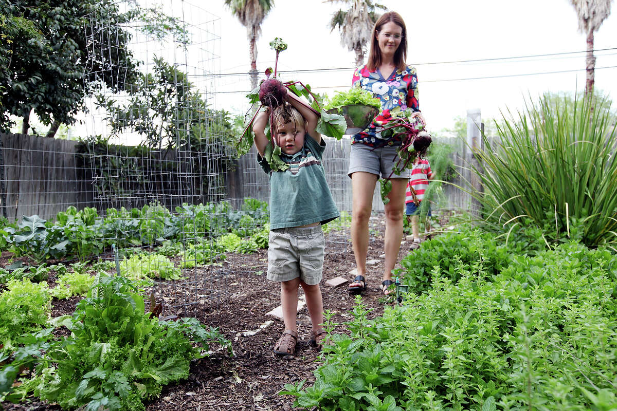 Andrew Cox, 3, (from left), his mother Anna Kehde and brother Nicholas Cox, 5, (rear) carry beets, lettuce, and fennel from the garden Monday April 1, 2013 at their home.