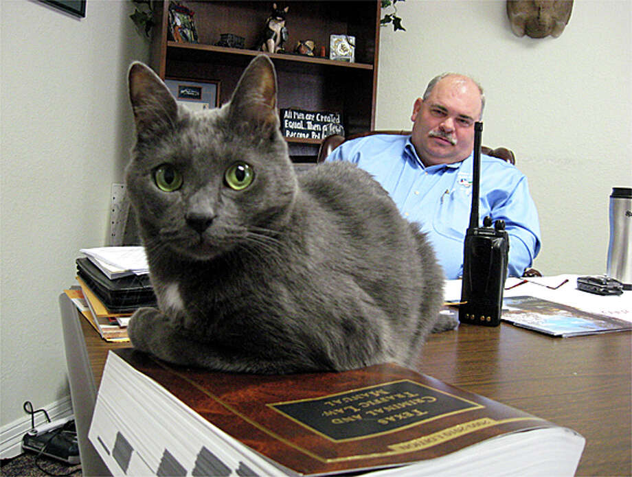 Jade keeps watch over visitors to Lumberton Police Chief Danny Sullins' office and provides a sort of therapy to both upset visitors and the police officers themselves, Sullins said. Blair Ortmann/The Enterprise Photo: Blair Ortmann