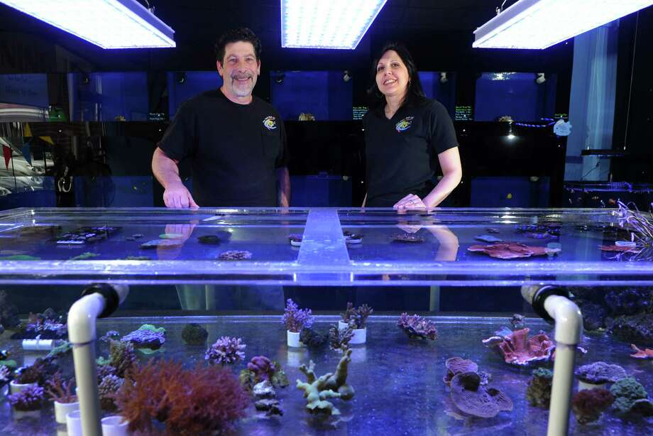 Jonathan and Donna Eckart, owners of Coral Reef, poses at the shop which is located on Main Street in Stratford on Thursday April 11, 2013. Coral Reef is a salt water aquarium store, specializes in 100 diffrent types of coral and over 500 types of exotic fish. Photo: Christian Abraham / Connecticut Post