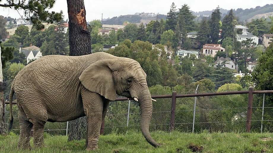 The Oakland Zoo, right, is seen as a model for how elephants should be treated in captivity. Photo: HBO