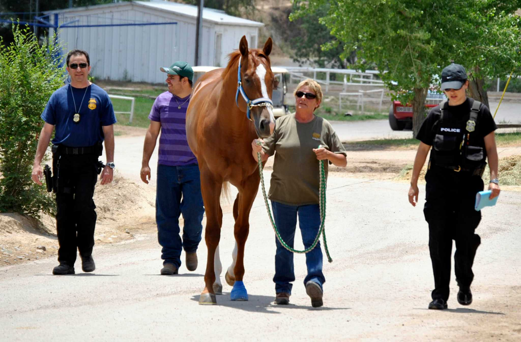 Seized horse tied to Zetas is paying off for feds - Houston Chronicle