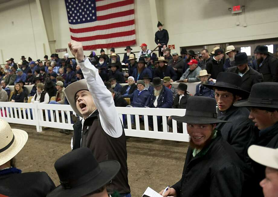 Auctioneer Wayne Yoder announces a bid from the crowd during the 9th annual Midwest Select Draft and Driving Horse Sale at the Alliant Energy Center arena in Madison, Wis., Friday, April 12, 2013.  Photo: Amber Arnold, Associated Press