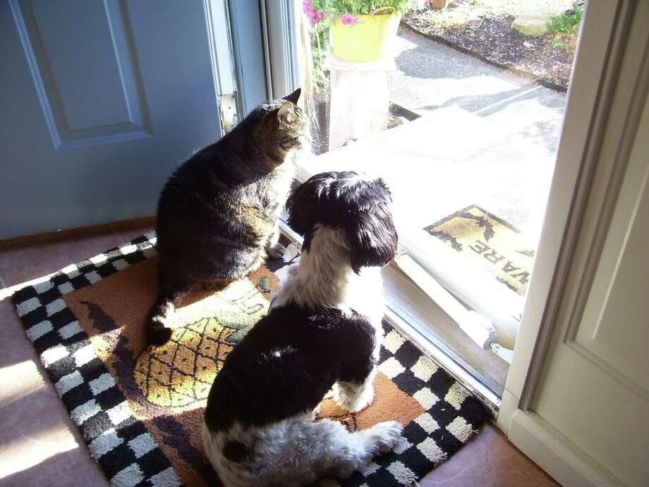 These pets, Emma and Ms. Kitty, look longingly outside during a recent sunny day at the home of Gail Lawrence of Colonie. (Gail Lawrence)