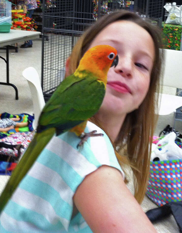 """Jordyn O'Quain, 9, of Iowa, La. communes with a feathered friend. Jordyn was a member of the Misha's Pets crew, in Port Arthur from Lake Charles for the Triangle Bird Club Exotic Bird Fair and Expo at the Robert """"Bob"""" Bowers Civic Center. The event continues today. Photo: Sarah Moore"""