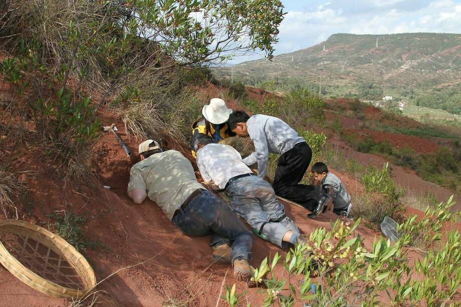 This image released by the University of Toronto shows field crew and volunteers working at the Dawa embryonic bonebed site near the city of Lufeng, in Yunnan, China.  An international team of scientists discovered a cache of dinosaur embryos estimated to be 190 million years old, the fossilized bones are among the oldest dinosaur embryos in the world. Photo: AP