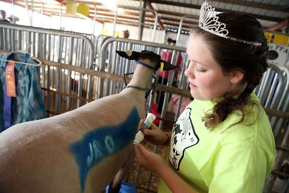 "Lamar County Livestock Show Junior Queen Madelyn Gooding paints letters to spell out ""Jr Queen"" on the side of her lamb before the annual sale portion of the show began Friday, April 12, 2013 in Paris, Texas.  (AP Photo / The Paris News, Sam Craft) Photo: Sam Craft, Associated Press"