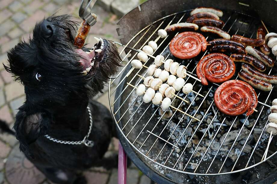 It was the best of times, it was the wurst of times:Begging for brats pays off for Chili at a barbecue in Busbach, Germany. Photo: David Ebener, AFP/Getty Images
